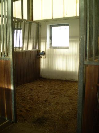 Helle und geräumige Pferdeboxen