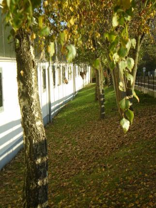 Stallungen mit Blick ins Grüne